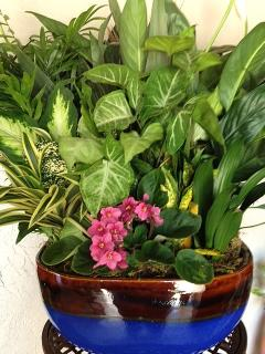 Mother\'s Day Dish Garden with African Violets!