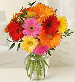 Daily Special! Gerber Daisy Delight